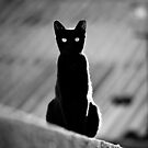 place in the sun for a black cat by waitin' for rain