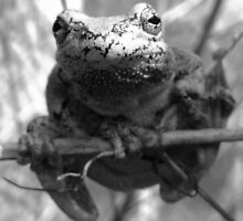 Mister Frog by Rowan Kempf