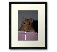 Forest the Hamster Framed Print