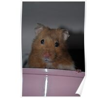 Forest the Hamster Poster