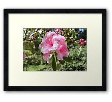 Pink Flower Close Up Framed Print