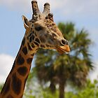 giraffe by FLLETCHER