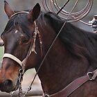 Roping Horse by KansasA