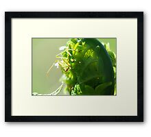 Green Insect on Fiddlehead Framed Print