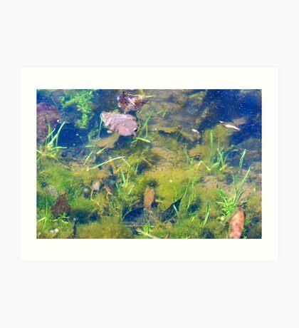 Salamander in My Farm Pond Art Print