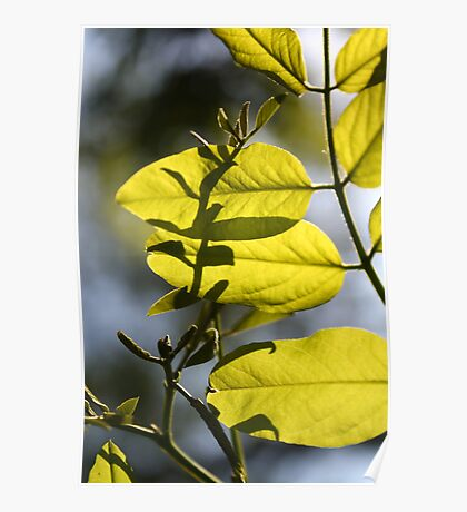 Spring light on a sprig Poster