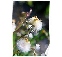 Parachutes for Plants Poster