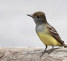 Great Crested Flycatcher (2011) by Bradley Nichol