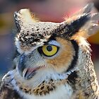 Great Horned Owl by Mully410
