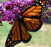 Monarch by Catherine  Howell