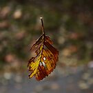 Falling Leaf by AnnDixon