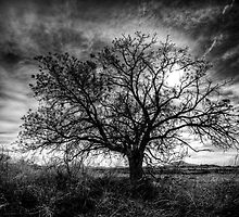 Left Alone by Bob Larson
