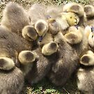 Group Hug - Skegness by Stephen Willmer