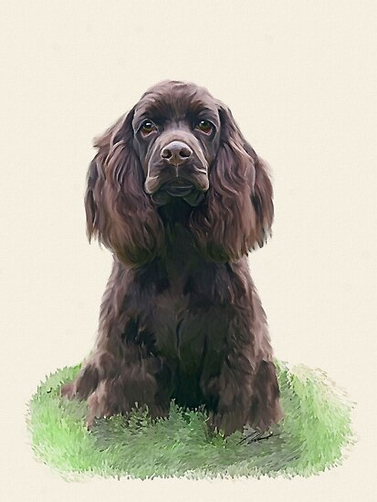 Spaniel puppy by Cazzie Cathcart