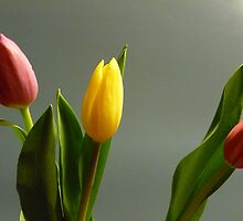 Trio of tulips by Sally Kate Yeoman