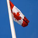 Canada Flag by Rae Tucker