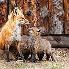 The Fox Family by Jay Ryser