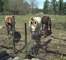 Horses grazing by SPPhotography