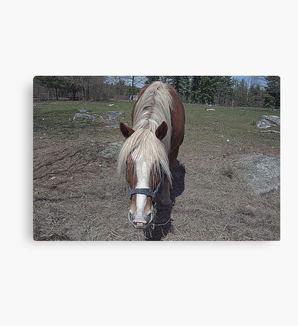 Hello,my name is Mr.Ed... Canvas Print