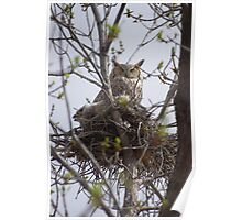 Momma Great Horned Owl and fledgling Poster