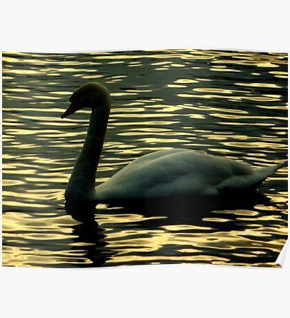 Twilight swan Poster