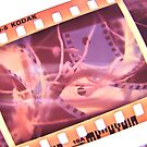 Film inside a Film inside a Film by Holly Daniels