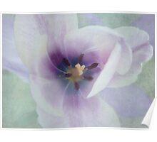 Inside Tulip Poster