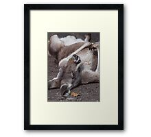 The Life of a Kangaroo- Scooby Roo Framed Print