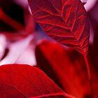 Sun Through Red Leaves by Rebecca Eldridge