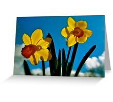 Daffodils reaching for the sky  Greeting Card