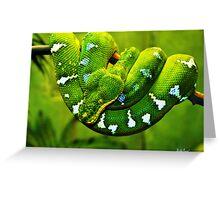 Gree Tree Python Greeting Card