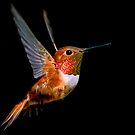 The Hummingbird by Jo Wienert