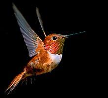 The Hummingbird by Jo Wienert