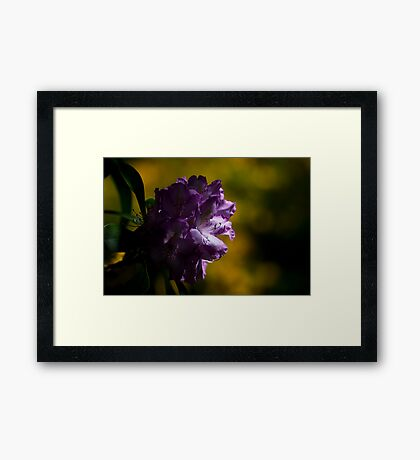 Moody Rhododendron Framed Print