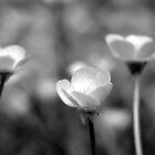 Buttercup trio  by elasita