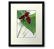 Scarlet Trillium - Light Morning Rain Framed Print