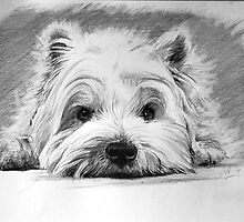 West Highland White Terrier by James  Arguile