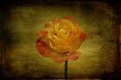 Orange Rose by Sandy Keeton