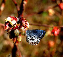 Sip of Nectar by Jason Lee Jodoin