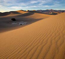 Sunset - Mesquite Sun Dunes by Clayhaus