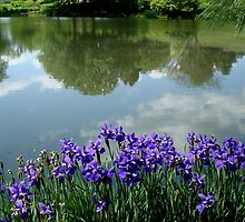 Irises at the Lake - Calendar Image    ^ by ctheworld