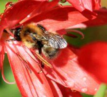 Glad bee Sticker