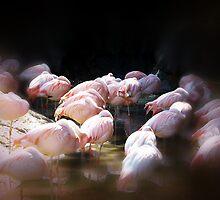 Flamingos by Sanguine