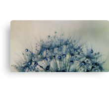 delicate wishes of hope Canvas Print