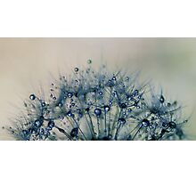 delicate wishes of hope Photographic Print