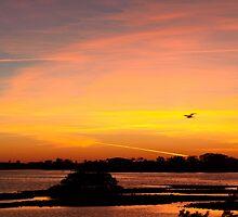 Real flights of fancy-wide view by ♥⊱ B. Randi Bailey