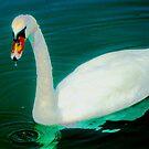 Swan on an aqua lake by ♥⊱ B. Randi Bailey