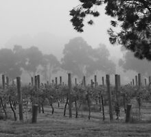 Misty Vineyard by Timo Balk
