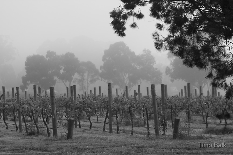 Misty Vineyard by Timo Balk
