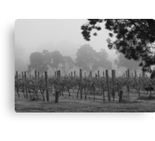 Misty Vineyard Canvas Print